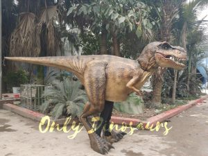 Adult T Rex Costume for Wow Party