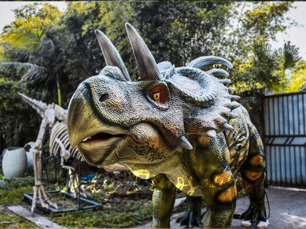 Life Size Artificial Dinosaur Animatronic Albertaceratops2 1