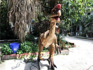 Museum Dinosaur Figure Animatronic Oviraptor