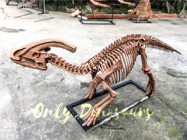 Realistic Complete Dinosaur Fossil Parasaurolophus for Museum3 1