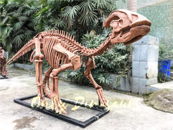 Realistic Complete Dinosaur Fossil Parasaurolophus for Museum5 1