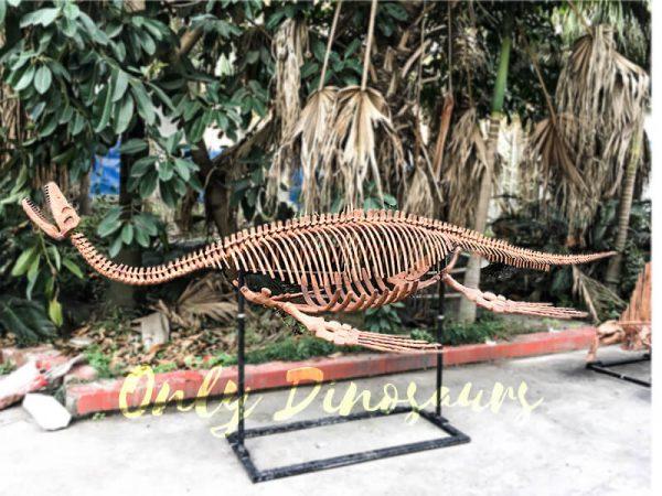 4 Meters Lifelike Complete Plesiosaur Dinosaur Skeleton1