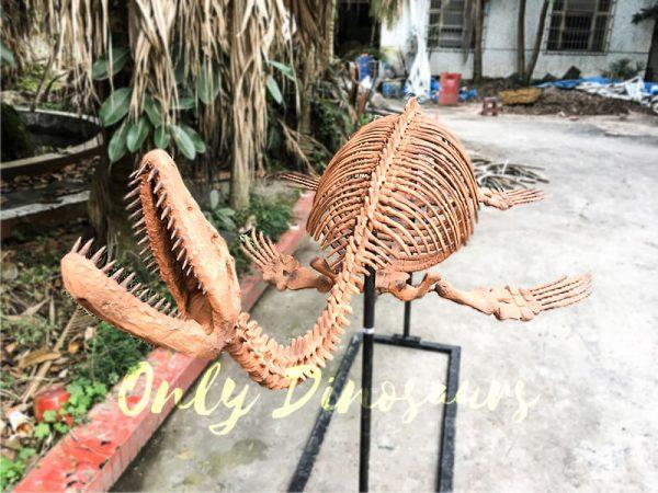 4 Meters Lifelike Complete Plesiosaur Dinosaur Skeleton3