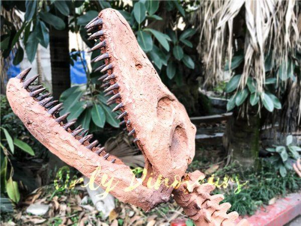 4 Meters Lifelike Complete Plesiosaur Dinosaur Skeleton5