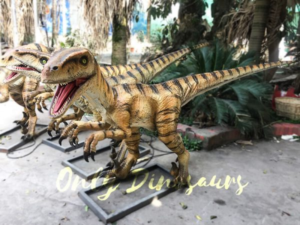 Agminate Utahraptor Animatronic Dinosaur Show Props5