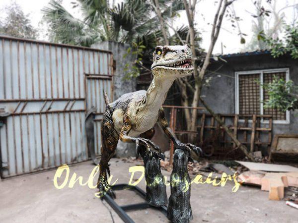 Animatronic Velociraptor with stub for Park2