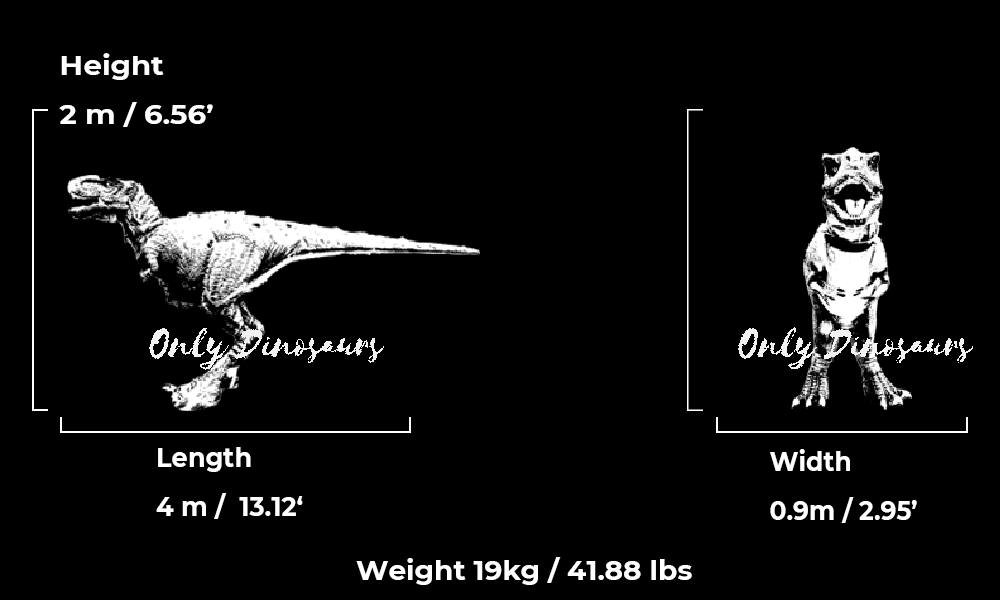 Dinosaur Costume Guide Size