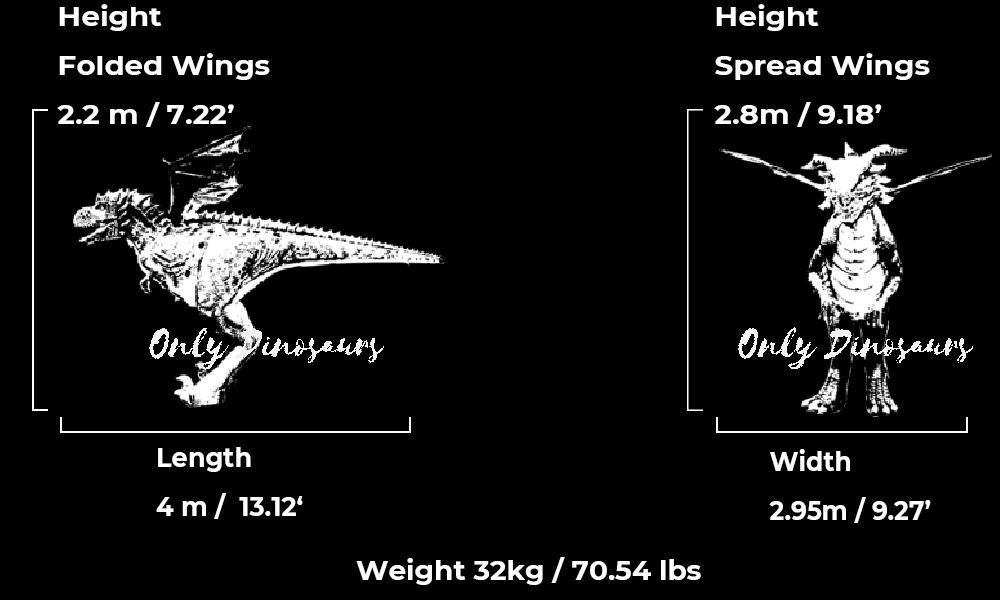 Dragon Costume Guide Size
