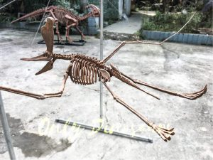 Real Dinosaur Fossils for sale Pterosaur Replica