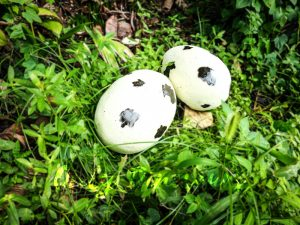 Spot Fiberglass Statue Dinosaur Eggs in pair for sale