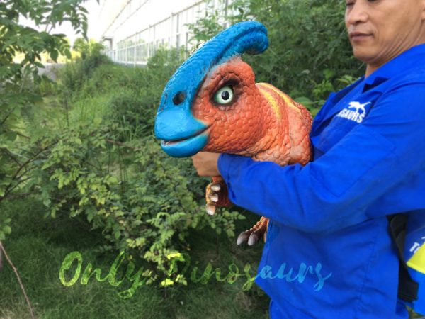 Life-Size-Parasaurolophus-Puppets-For-Baby5-1
