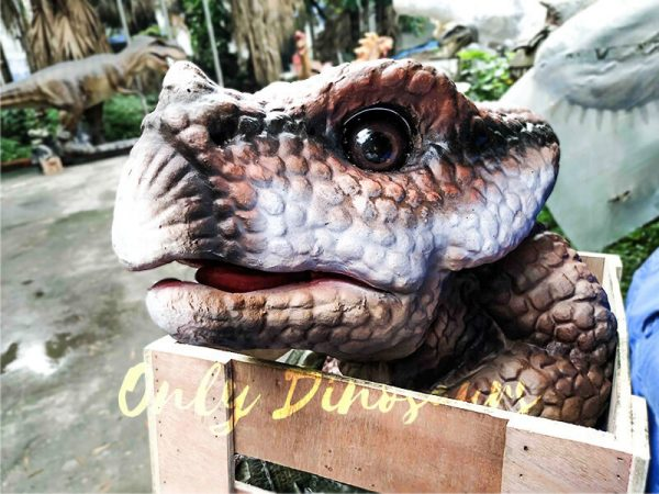 Lifelike Baby Protoceratop Dinosaur Puppet in Crate2
