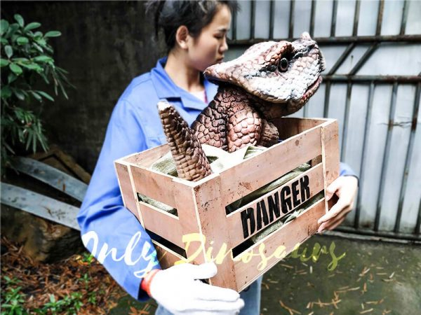 Lifelike Baby Protoceratop Dinosaur Puppet in Crate3