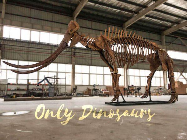 Lifesize Palaeoloxodon namadicus Skeleton for Museum5