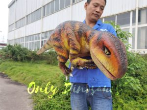 Stage Show  Life-Size Handheld Velociraptor