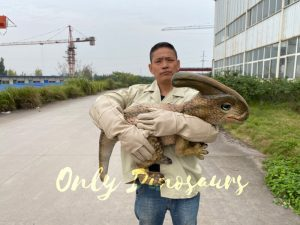 Loveable Baby Parasaurolophus with False Arm