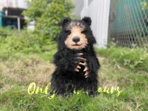 Adorable Handheld Baby Black Bear Puppet