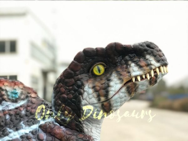 Brown-Adorable-Spinosaurus-puppet-sits-on-the-hand(1)