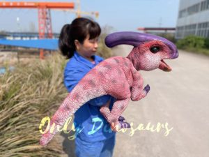 Cute Handheld Parasaurolophus Cub With Beautiful Purple Color