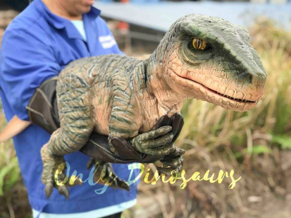 Cutest-Baby-Raptor-with-Gloves1