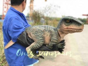 Cutest Baby Raptor with Gloves