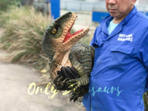 Cutest-Baby-Raptor-with-Gloves3
