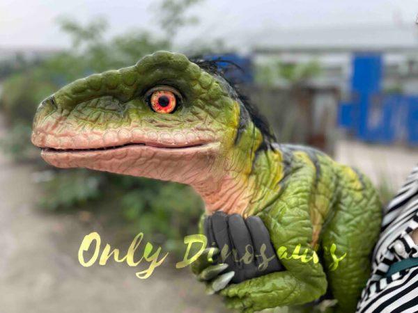 Full-Body-Baby-Velociraptor-Cub-on-sale1