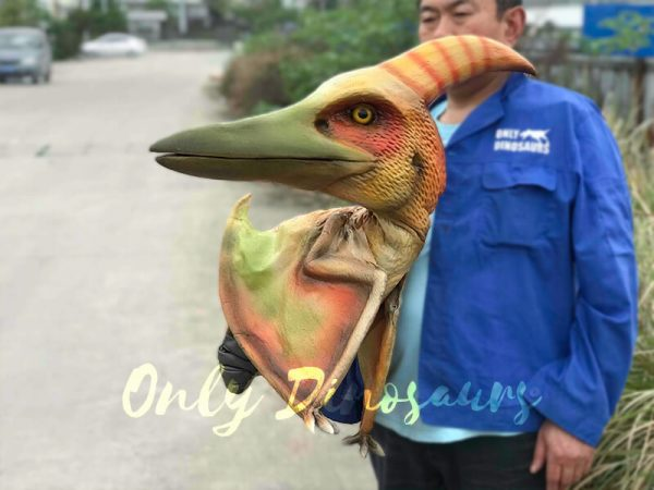 Lifelike-False-Arm-Pterosaur-Puppet-for-Sale3