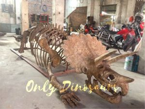 Museum-quality Triceratops Skeleton Replica for Sale