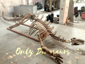 Realistic Dinosaur Stegosaurus Bone for Exhibits