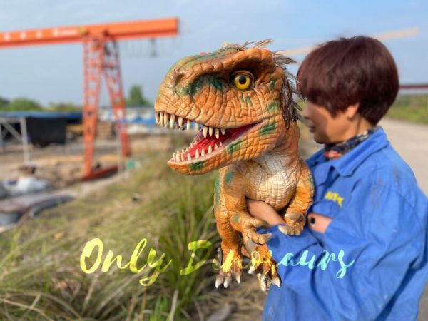 Feathered-Baby-T-Rex-Dino-Puppet-for-Sale5
