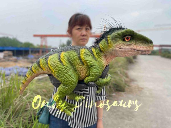 Full-Body-Baby-Velociraptor-Cub-on-Sale5-1