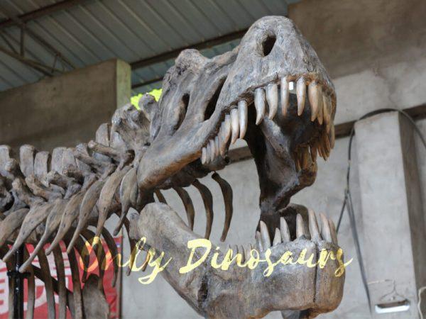 Giant-Tyrannosaurus-Rex-Skeleton-for-Museum2
