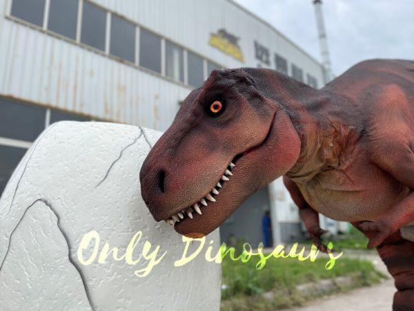Lifelike-Hidden-Legs-T-Rex-Dinosaur-Costume-for-Sale5