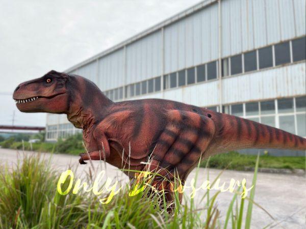 Lifelike-Hidden-Legs-T-Rex-Dinosaur-Costume-for-Sale6