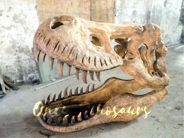 Big-Tyrannosaurus-Rex-Skull-Fossil-for-Museum1