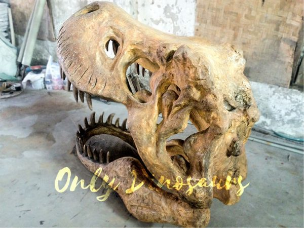 Big-Tyrannosaurus-Rex-Skull-Fossil-for-Museum2