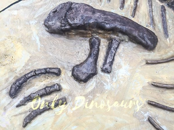 Lifesize-Dinosaur-Fossil-Replica-for-Sale5