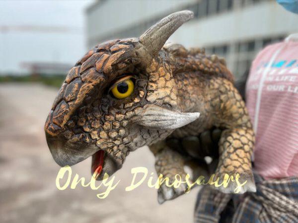 Realistic-Dinosaur-Baby-Ankylosaur-False-Arm-Puppet4