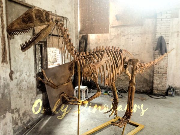 Realistic-Dinosaur-Skeleton-for-Museum1