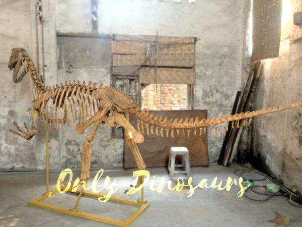 Realistic-Dinosaur-Skeleton-for-Museum6