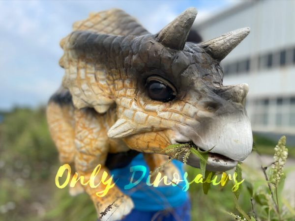 Realistic-False-Arm-Baby-Triceratops-Dino-Puppet2