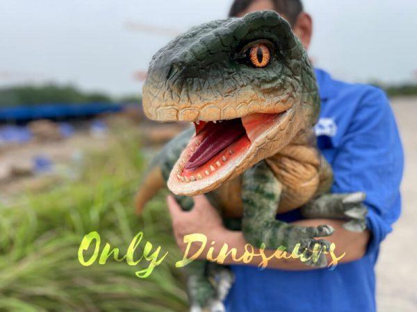 Realistic-Raptor-Dinosaur-Hand-Puppet-for-Kids5