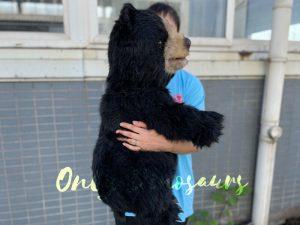 Cute Animal Black Bear Hand Puppet