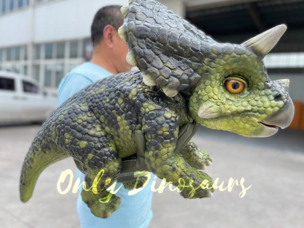 A Man Carrying a Dark Green Baby Triceratops