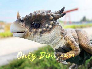 False Arm Exalting Pachycephalosaurus Puppet