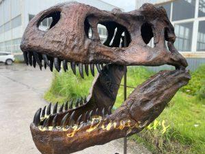 Vivid Fiberglass T-Rex Skull for Sale