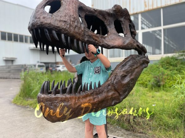 Vivid Fiberglass T Rex Skull for Sale6 1
